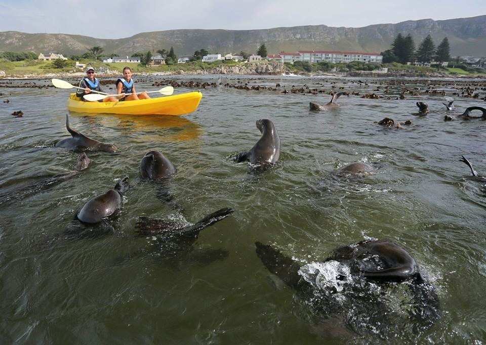 Holiday Activities In Cape Town